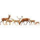 Fallow deer + red deer, 12 pieces (N)