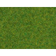 Scatter Grass Ornamental Lawn 2,5mm, 20 g
